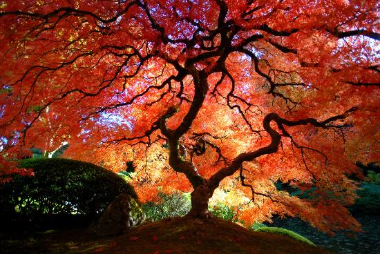 podzim-v-japonsku