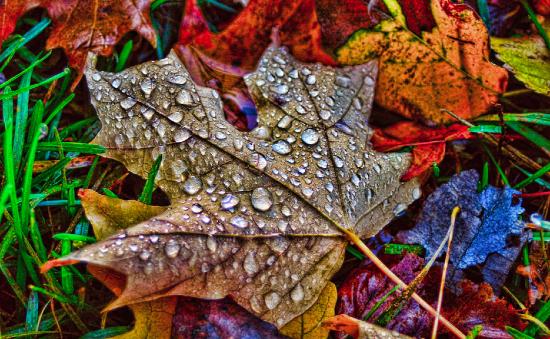 podzimni-rosa-na-listu