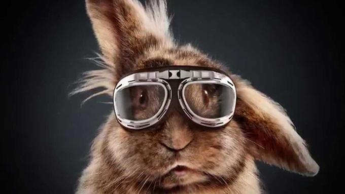 rabbit-mediamarkt
